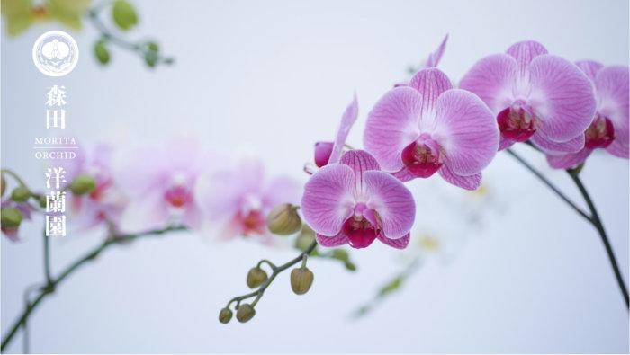 森田洋蘭園ブランディングサイトへ